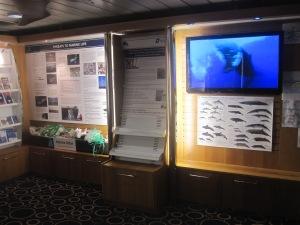 Orca-Wildlife-Centre-King-Seaways