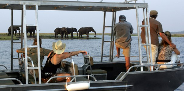 zambezi-queen-game-viewing