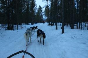 Huskies Holmen Norway