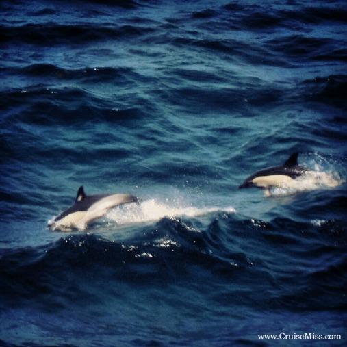 DolphinsCruiseSeaDay