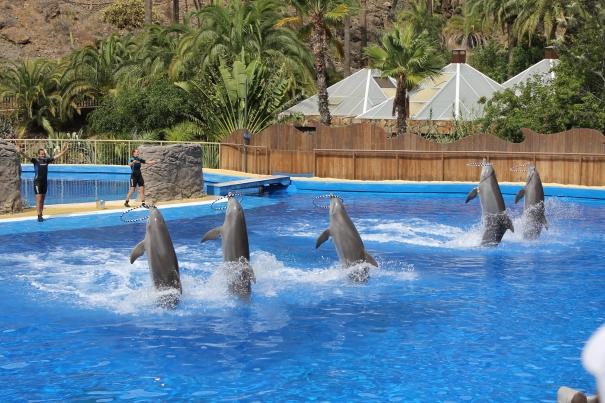 Dolphins Palmitos Park