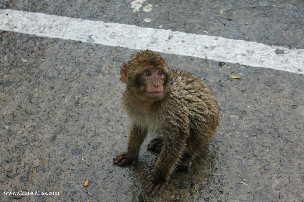 A baby monkey in Gibraltar - he was a bit smelly!