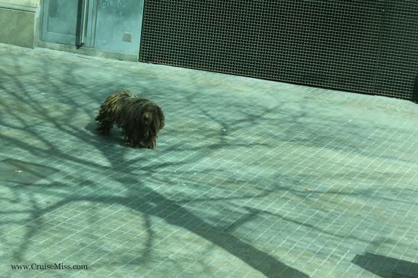 A dog with dreadlocks
