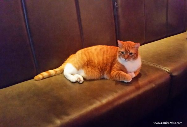 Ginger-Cat-Prik-Amsterdam
