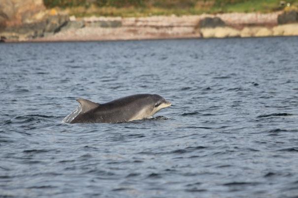 Dolphin-Invergordon