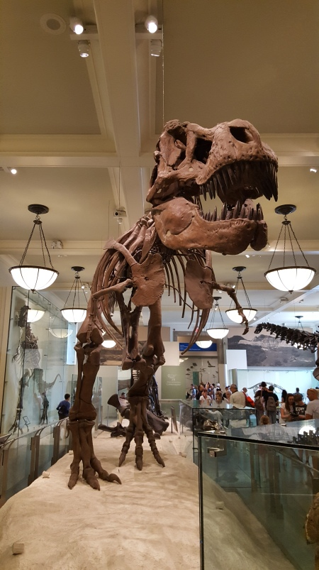 Natural-History-Museum-T-Rex
