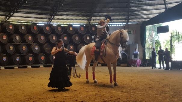 andalusian-horses-saga-cruises